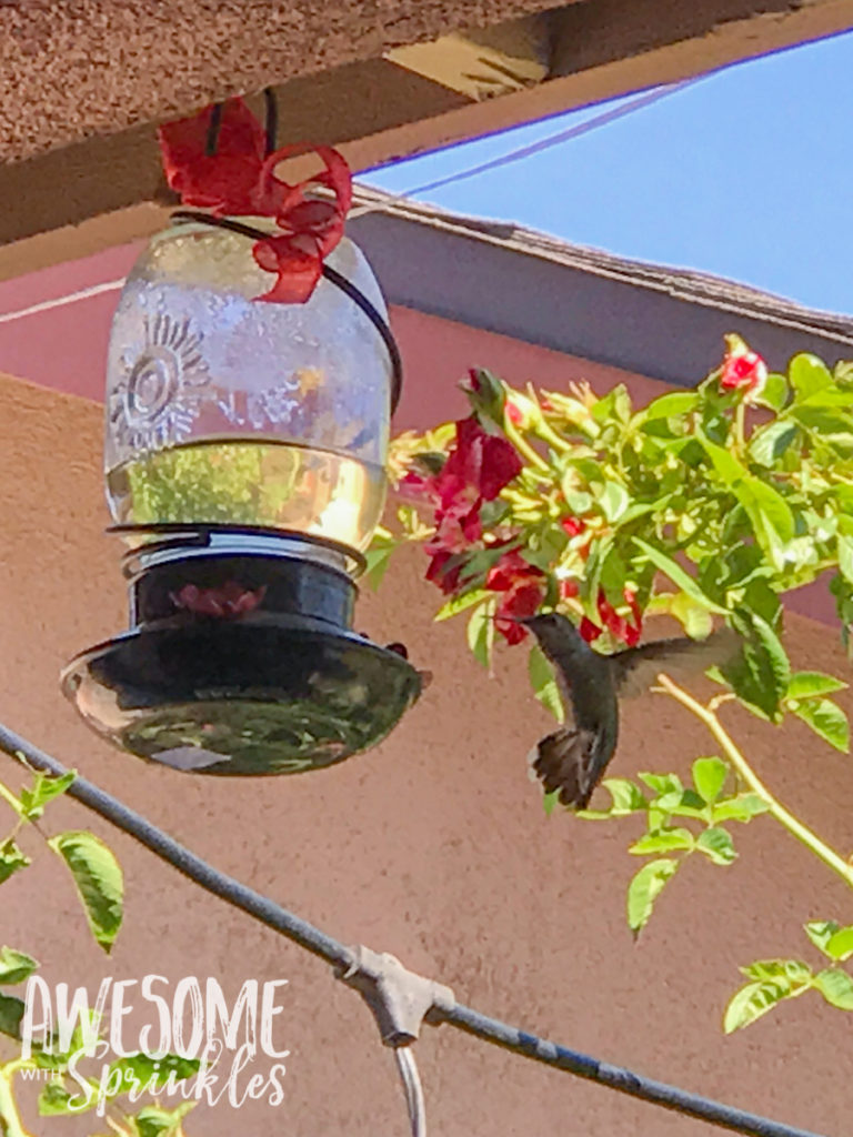 Homemade Hummingbird Nectar + Tips for cleaning your feeder | Awesome with Sprinkles